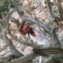 jordanie-arbre-noueux-avec-bedouin_wilfried-colonna