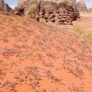 cest-fleuri-au-printemps-et-dans-le-sable-aussi
