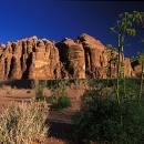 desert-et-verdure-au-printemps-wadi-rum-photo-www-marioverin-com_