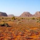 desert-fleuri-au-printemps