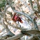 Des arbres noueux...JPG