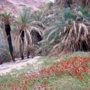 oasis-avec-palmiers-wadi-hasa