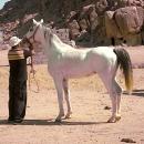 nos-chevaux-adham-qosqabar-embarque