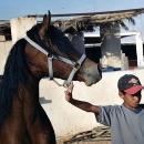 nos-chevaux-aicha