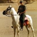 chevaux-baltis-et-cavaliere