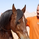 nos-chevaux-bel-etalon
