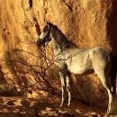 nos-chevaux-latahab-au-soleil