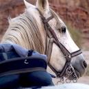 nos-chevaux-seef-saad-avec-pelham