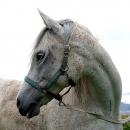 chevaux-zohra