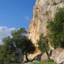 jordanie-falaise-du-nord-et-chene-vert