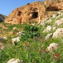 Jordanie-prairie-fleurie-vers-kufranja