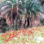 Oasis en Wadi Hasa
