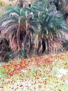 Oasis en Wadi Hasa, vers la Mer Morte