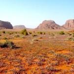Desert fleuri au printemps:WC-redim